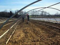building more high tunnels to grow early heirloom tomatoes, peppers, and cucumbers for our CSA members