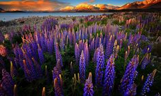 33 Outstanding Colors and Details of Natural Landscapes