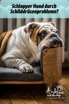 Unsere natürlichen Öle helfen, die Schilddrüsenfunktion deines Hundes wieder ins Gleichgewicht zu bringen bzw. helfen der Schilddrüse bei ihrer Arbeit. Eines hilft von Innen, eines von außen - alles Infos dazu findest du auf der Webseite. #hunde #hundeliebe #hundepflege #andreaandthedog #naturpur #chemiefrei #kraftdernatur #bioqualität #dogs #petcare #ohnekonservierungsstoffe #handmadewithlove #steiermark #besterfreunddesmenschen #schilddrüse Golden Retrievers, French Bulldog, Terrier, Animals, Thyroid Gland, Kidney Failure, Pets, Fluffy Animals, Addison's Disease