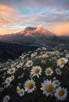 Mt St Helens towering above .You can find Scenery and more on our website.Mt St Helens towering above . Pretty Landscapes, Nature Aesthetic, Flower Aesthetic, Aesthetic Japan, Beautiful Sunrise, Travel Photography, Scenery Photography, Photography Tips, Beautiful Nature Photography