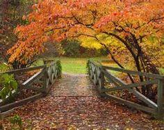 Botanical Gardens At Asheville -  North Carolina