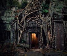 Та Пром храм, Ангкор, Камбоджа Ta Prohm temple, Angkor, Cambodia