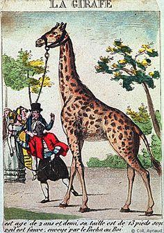 Promenade de la girafe
