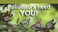 Protect the bees and butterflies: plant a pollinator-friendly garden. This site has planting guides, resources, even the BeeSmart Pollinator Gardener App!