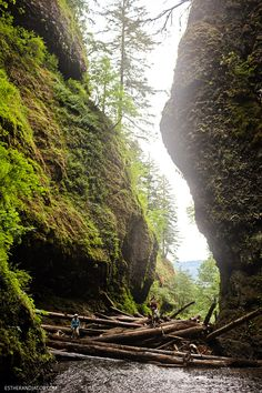 The Oneonta Gorge Hike | Hiking Oregon.
