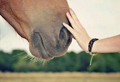 horse, love, and touch image