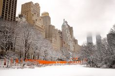 No matter how New Yorkers felt about Christo and Jeanne-Claude's Central Park installation The Gates, no one could deny that the 7,500 billowing saffron panels were completely transformed by a mid-February snowfall. I had made several visits to the installation, but I arrived just after sunrise on the morning after the snow to photograph without the crowds. Ten years later, I rediscovered this image, which I had never prepared or printed before. It captures my favorite aspect of The Gates...