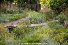 Pathways intersecting in California native plant front yard, lawn substitute meadow garden with birdbath, wildflowers, and fescue grass (Festuca idahoensis, F. californica)