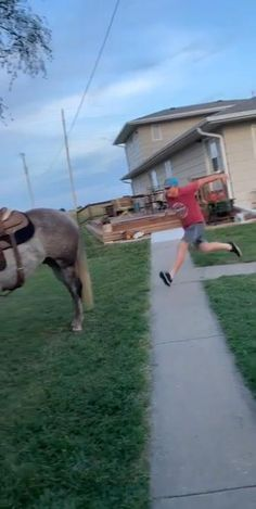 Funny Horse Videos, New Funny Videos, Super Funny Videos, Funny Horses, Funny Video Memes, Crazy Funny Memes, Really Funny Memes, Funny Animal Videos, Funny Animal Pictures