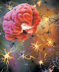 Neurociências em benefício da Educação!: A IMPORTÂNCIA DA NEUROCIÊNCIA NA EDUCAÇÃO