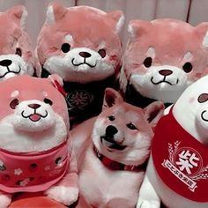 Ideas for dogs aesthetic good Peach Aesthetic, Aesthetic Themes, Aesthetic Images, Aesthetic Backgrounds, Kpop Aesthetic, Aesthetic Wallpapers, Orange Pastel, Grunge, Shiba Inu