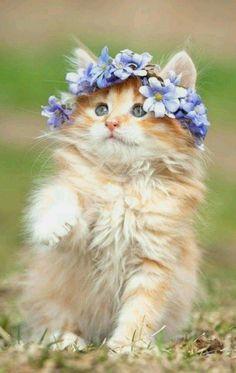 Cute Cat Japanese Names. Cute Cats Being Naughty every Cute Cats & Kittens Wallpaper Hd Cat Themes Pretty Cats, Beautiful Cats, Animals Beautiful, Pretty Kitty, Cute Baby Animals, Animals And Pets, Funny Animals, Funny Cats, Animals Images