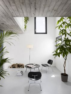 White walls. White floor. Large plants.