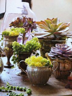 Home: Eleven Creative Indoor Gardens  (Cute succulents in repurposed containers viaPinterest )