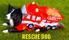Rescue Dogs are the best breed: New in the life of Asha...