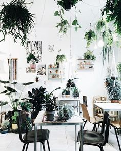 This store is a dream @wildernisamsterdam  джунгли в центре Амстердама  магазин для любителей растений ✨