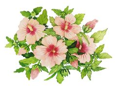 Title : 무 궁화 / Flower Art . Artist : @mmmin_kkkyung 김민경 팔로우 좋아요/ 문의 > DM주세요 / 무단 카피 금지, 신고  blog.naver.com/sarah600 #axb #art #artist #artwork #draw #drawing #illust #illustration #flower #mood #watercolor #illustrator #portrait #daily #trend #fashion #flowerpainting #패션 #꽃 #손그림 #일러스트 #전시 #그림 #미술 #데일리 #イラスト #アート #写真 #イラストレーション