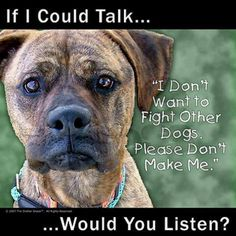 Save pit bulls from so-called humans!