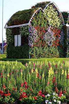 Dubai Miracle Garden #shahrokhphotography