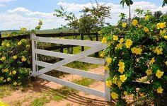 Roça lirios do campo.: 'Aprendi com a primavera,a deixar-me cortar e volt...