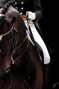 Dressage by TP Photography on 500px