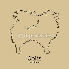 Η σιλουέτα της φυλής σκύλου Pomeranian Spitz