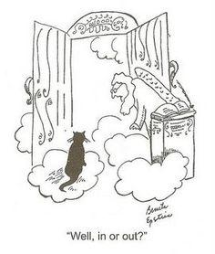 Haha!  =^..^= www.kittyprettygifts.com #cats #cute #lolcats #memes #kittens #kitties