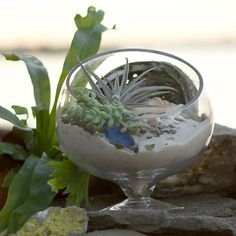 Spotlight Terrarium: An angled opening provides a view into your glass garden, on a footed base for resting in a sunny window.