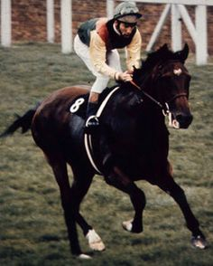 Posts about Northern Dancer written by THE VAULT: horse racing past and present Beautiful Horses, Animals Beautiful, Epsom Derby, Triple Crown Winners, Sport Of Kings, Thoroughbred Horse, Racehorse, Horse Pictures, Show Horses