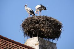 Burgenland: Famous for its storks!