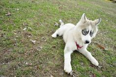beautiful dog with very singular eyes