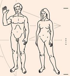 Homo-habilis, Homo-erectus, Neanderthal - Ancient Man and His First Civilizations Plaque De Pioneer, Homo Habilis, Fountain Pen Drawing, Pale Blue Dot, Men Vs Women, Star Wars Episode Iv, Human Evolution, Les Religions, Male Body