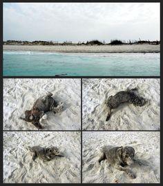 Eros, disfrutando de la arena, en la playa de Estrenc· Mallorca· Spain. By Pedro Pou