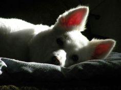 """""""YOU ARE MY SUNSHINE"""" MY LOVE...NIKI DOGG. 12 YEARS OLD."""