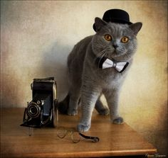 Author: Eleonora Grigorjeva - British Shorthair and old camera