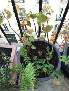 Nouvelle séance de #plantations sur mon #balcon http://www.pariscotejardin.fr/2015/11/nouvelle-seance-de-plantations-sur-mon-balcon/