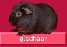 Gladhaar