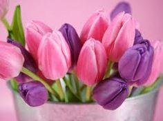 Tulipanes rosas y violetas