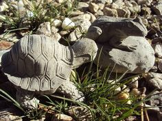 Frog Turtle Statuary A Pair Of Buddies by MountainArtCasting
