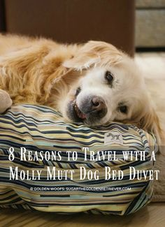 8 Reasons to Travel with a Molly Mutt Dog Bed Duvet #ad