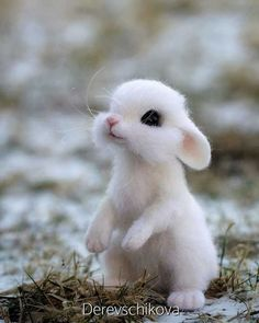 cute animals Russian Artists Felted Wool Animals Might Stun You With Their Cuteness Pics) Baby Animals Super Cute, Cute Baby Bunnies, Cute Little Animals, Cute Funny Animals, Like Animals, Animals And Pets, Baby Animals Pictures, Cute Animal Photos, Cute Pics
