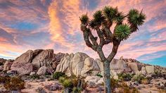 Thinking about a Joshua Tree camping trip? What are you waiting for? Learn everything you need to know about one of America's most beautiful national parks.