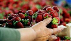 Αποκάλυψη! Πώς να ξεχωρίζουμε τα μεταλλαγμένα λαχανικά και φρούτα …