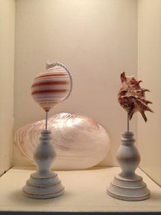 Seashells. #paradiseinpontevedra #seashells