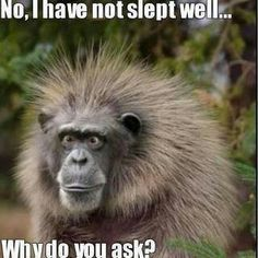 """""""No, I have not slept well... why do you ask?"""" I can relate; we've all had our share of restless, sick nights."""