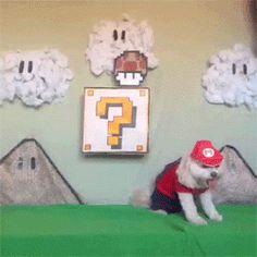 Dog gif, watch it in PomposidadPomposa.