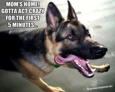 Mom's home!  Gotta act crazy for the first 5 minutes...