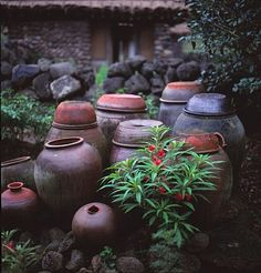 Korean Traditional, Traditional House, Fermentation Crock, Pots, Drawing Reference, Indoor Plants, Outdoor Gardens, Garden Design, Photo Galleries