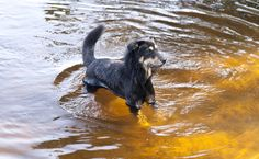 The Disease Dogs Can Get From Standing Water