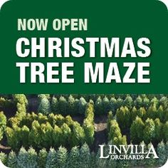 Now through March 4th, Linvilla is featuring the world's largest Christmas Tree Maze. Did you ever wonder what happens to all of the unsold Christmas Trees? Usually they are just made into mulch, but Linvilla Orchards has come up with a new, exciting and green way to use Christmas trees that were never bought!